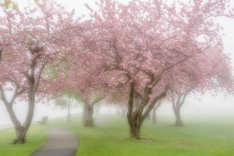 mamaroneck spring