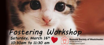 Humane Society of Westchester Fostering Workshop - (10:30am-11:30am) @ Humane Society of Westchester in New Rochelle |  |  |