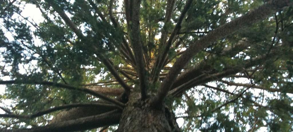 tree-tower