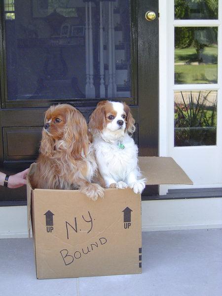 dogsinbox copy