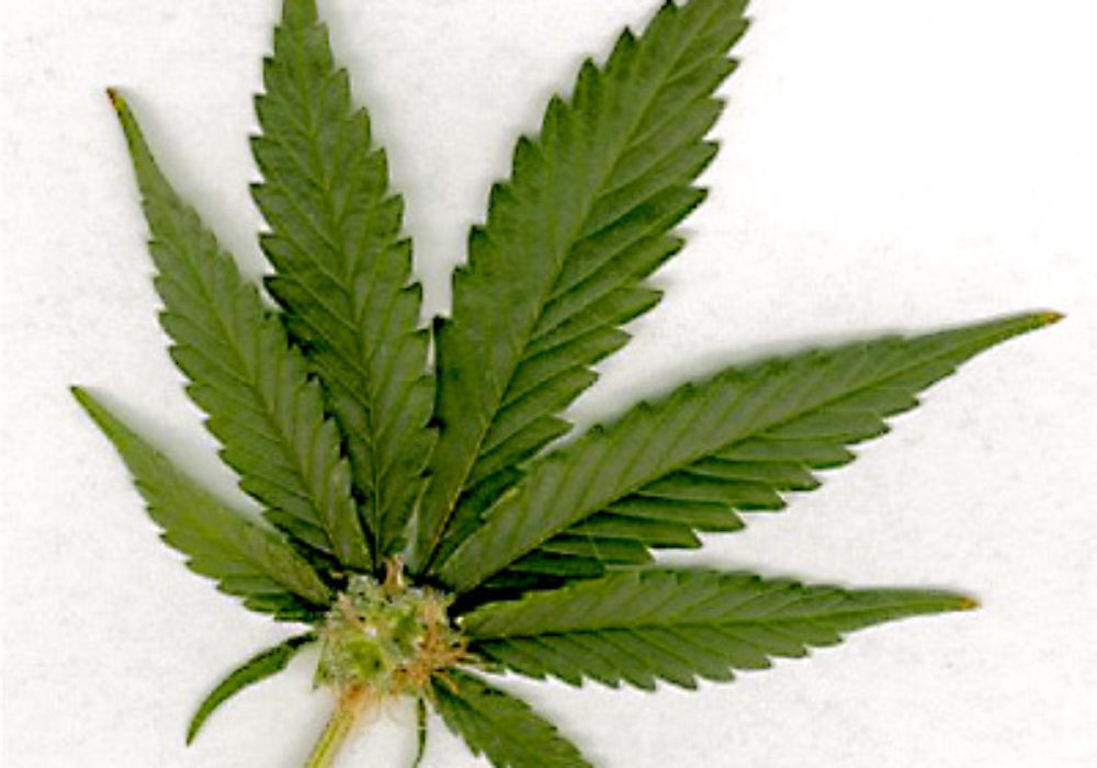 Changes in Westchester for Pot Possession