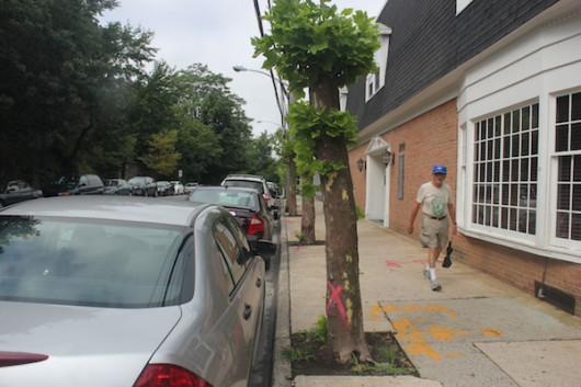 streetscape larchmont