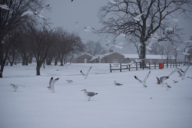 snow harbor island