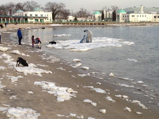 playland_ice_floes-w_polar_bears-dh-2-3-2014