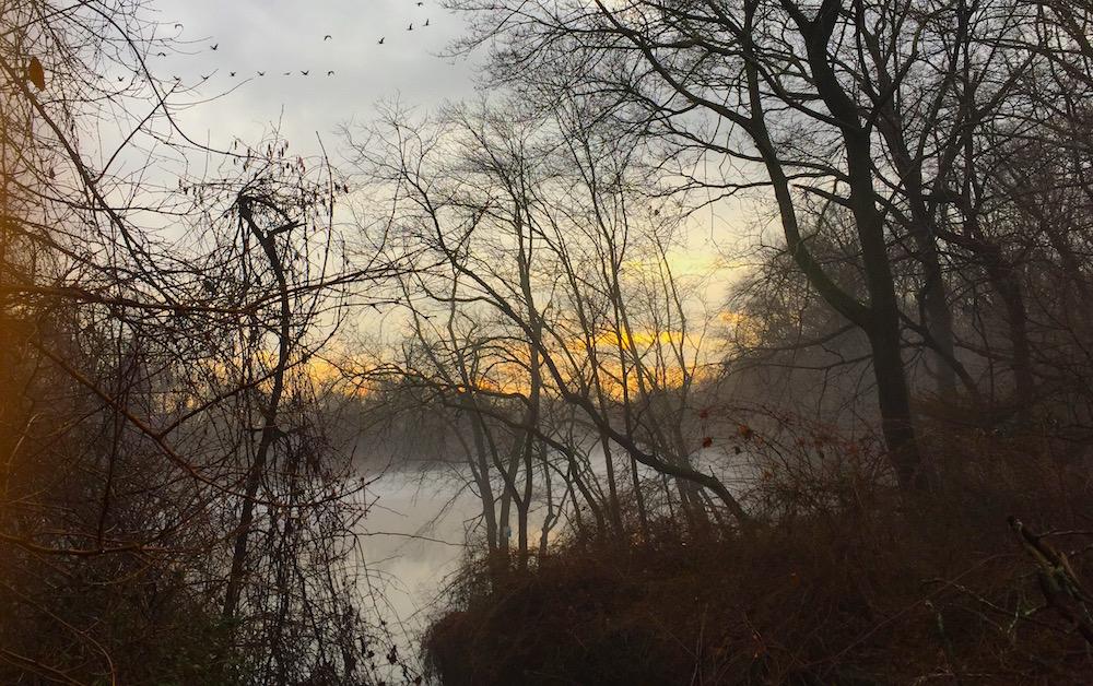 sheldrake, photo winter, birlds,