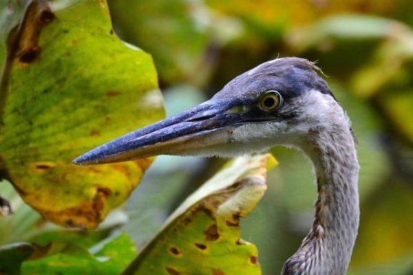 Sheldrake Young Naturalist Academy Summer Camp @ Sheldrake Environmental Center - Online via Zoom |  |  |