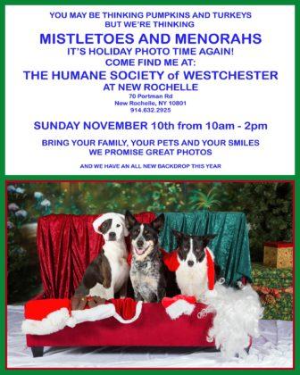 Holiday Pet Portraits at Humane Society of Westchester (Day Two) @ Humane Society of Westchester |  |  |