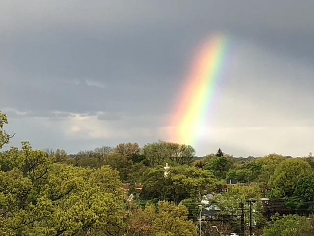 rainbow larchmont