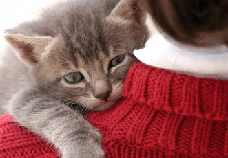 Humane Society of Westchester Fostering Workshop @ Humane Society of Westchester |  |  |