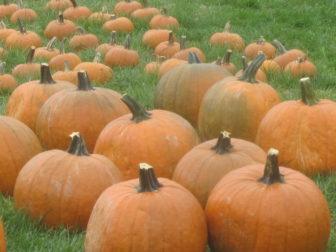 Pumpkin-Palooza: A STEM Program @ Sheldrake Environmental Center        