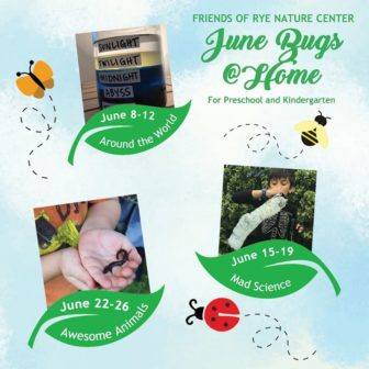 Rye Nature Center: June Bugs @Home @ Friends of Rye Nature Center |  |  |
