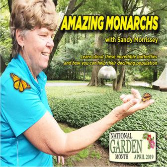 Amazing Monarchs with Sandy Morrissey @ Larchmont Public Library |  |  |
