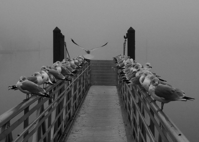 mamaroneck harbor fog, john cuddy