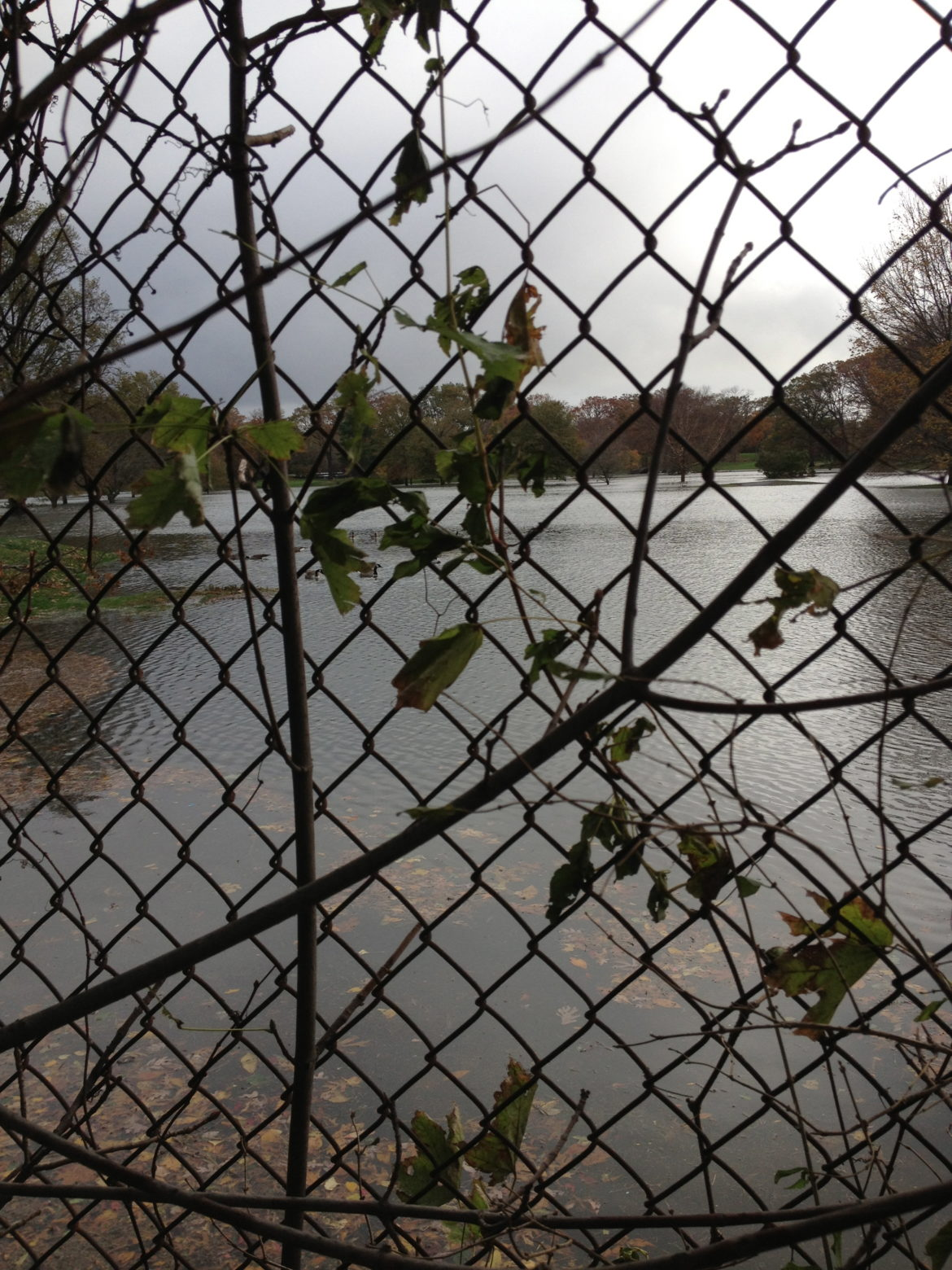 flood Sandy – Hampshire – through fence at Hommocks – day after