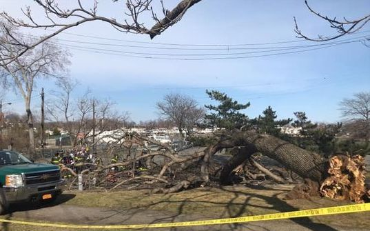 fallen tree, neptune park