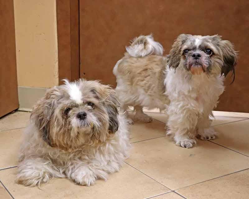 dogs Sassy Suki