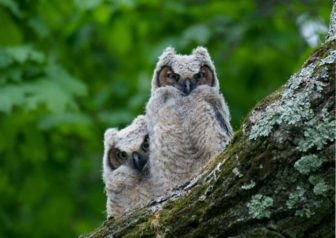 Things That Go Bump in the Night – for Preschoolers @ Sheldrake Environmental Center        